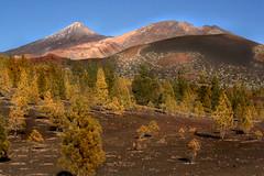 IMG_3801 Mount Teide,Tenerife,Canary Islands (jaro-es) Tags: espaa mountain mountains nature canon spain natur n natura tenerife spanien montaas naturesfinest spanelsko naturewatcher eos450 mygearandme naturemaster