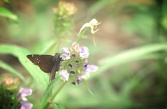 Wildflowers and Butterflies (fromky) Tags: butterfly wlldflower scavenger7
