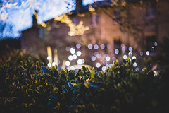 Tree Lights (Chad Powell Design and Photography) Tags: tree night canon dark lights hotel lowlight bokeh grain iso isleofwight 365 canon50mmf18 dots treelights 6d royalhotel canon50mm canon50mm18 365challenge 365daychallenge bokehdots canon6d syntheticbokeh