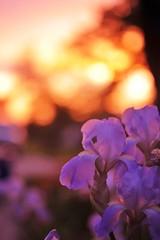 Sunset (Creative_Light_Photography) Tags: iris sunset nikon availablelight d700
