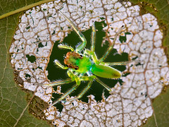 IMG_0001 (thienbs) Tags: macro mantis spider thienbs