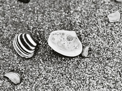 DSC_4460 schelpen zw (Wilf place) Tags: sea bw white black beach coast shell zee zwart wit schelpen zw kust