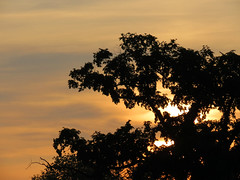 tree silhouette at sunset (natureburbs) Tags: sunset tree scenic orangesky newjerseynature