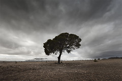 The Last Tree (DavidFrutos) Tags: naturaleza storm tree nature field clouds landscape paisaje murcia nubes rbol tormenta campo pino canondslr cieza canon1740mm davidfrutos 5dmarkii