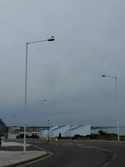 The Light Watch (failing_angel) Tags: 130915 kent margate forthill gull streetlight