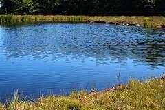 kék tó / blue lake (debreczeniemoke) Tags: nyár summer láp bog tőzegláp muskeg tăulchendroaiei tó pond kék blue tópart lakeside gutinhegység gutinmountains olympusem5