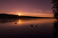 Summer moving on (zapatilla83) Tags: norge norway landscape landskap summer2016 sommer summer nikon sunset solnedgang water vann innsj lake skumsjen oppland