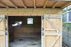 Making A Nest (George De) Tags: pigeon nest build hornimanmuseum hornimangardens london
