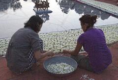 joy_at_work_5768 (Manohar_Auroville) Tags: sri aurobindo birthday auroville matrimandir urn amphitheatre decorations flowers beauty beauties girls manohar luigi fedele 15816