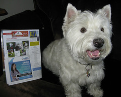 "8/12B ~ Riley in the ""Biz X"" Magazine (ellenc995) Tags: riley westie westhighlandwhiteterrier 12monthsfordogs16 bizx magazine thesunshinegroup rubyphotographer coth challengeclub abigfave alittlebeauty coth5 supershot akob pet100 pet500 100commentgroup pet1000 pet1500"