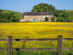 Golden Meadow (Johnners61) Tags: happyfencefriday happy fence friday golden meadow field farm cottage barn farmhouse house haslingden rossendale england britain gb uk microfourthirds micro four thirds olympuspen olympus pen epm2 rural summer sunny bright