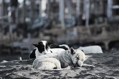 Party People (trancebutton) Tags: dogs beach bali canggu party beachbar indonesia