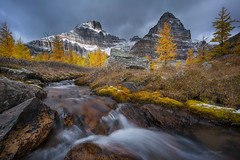 'Larch Valley' - Banff National Park (Gavin Hardcastle - Fototripper) Tags: ziess batis 18mm sony a7r2 banff larch valley trees fall autumn river mountains sentinel pass creek winter snow ice gavinhardcastle fototripper