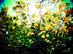 September Branches (Stephenie DeKouadio) Tags: canon outdoor painting art artistic abstract abstractart tree trees branches light darkandlight color colour colorful
