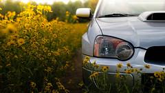 Subie in the Fields (Bradley Wong) Tags: subaru wrx flowers field flagstaff arizona tuner