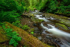 green is the country (Sam Scholes) Tags: arch cape landscape soft nature water stream state park oswald west trees beach oregon beautiful motion south green softness westsouth forest blur archcape motionblur oswaldwestsouth oswaldweststatepark statepark