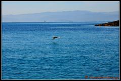 DSC_6457_cr (Broukos) Tags:   broukos greece magnesia water sea light colour adventure landscape nature floating skyline blue