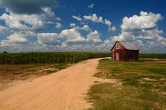 Corn Field (davidwilliamreed) Tags: old rusty crusty metal tin roof shed cornfield bostwickga morgancounty