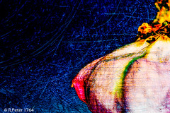 3 wishes (R-Pe) Tags: rpe www1764org 1764org 1764 camera canon nikon sony ausstellung show exhibition gift geschenk bild pic picture foto photo photographie fotografie rbi peter abstract melancholie aufnahme