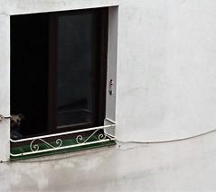 La ventana indiscreta (enrique1959 -) Tags: animal perro ventana bilbao paisvasco euskadi europa espaa vividstriking