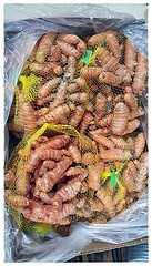 W36 Organic Red Turmeric