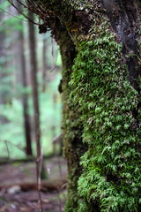 Moss and Tree (leyannmeau) Tags: nature natural strathconapark beautiful turtleisland