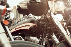 Harley-Davidson Universe (marcelo.guerra.fotos) Tags: harley harleydavidson shadows cool canon detail deep design interestingness curitiba largodaordem feira paran brasil