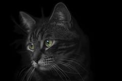 Green eyes (Beu C) Tags: beuc nikon nikond7100 d7100 lightroom noiretblanc blackandwhite chat cat animal animals 50mm 50mmf18 livingroom darkness blackwhite
