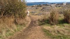 2016 09 19 Cattle Point_0033 (Blake Handley) Tags: blake blamar cattlepoint oakbay victoria bc britishcolumbia vancouverisland canada dogs ocean shoreline beardedcollie beardie