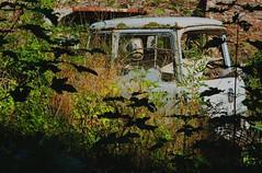 Damaged beyond repair (BEDFORD TK) (xavnco2) Tags: camion truck trucks lorry autocarro lkw bedford tk scrap feuillage bush pave