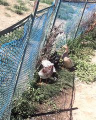 024 Privacy Please (saschmitz_earthlink_net) Tags: 2016 california encino lakebalboa orienteering laoc losangelesorienteeringclub losangeles losangelescounty lakebalboaanthonycbeilensonpark