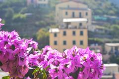 (ola_alexeeva) Tags: italy terre 5      cinque september sun  liguria  mountains riomaggore  flowers