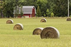 Bales, Red Barn (rjseg1) Tags: hay bales rural farm doorcounty