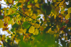 Autumn Leaves 2 (dhc_photos) Tags: autumn seasons equinox change fall color
