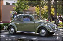 Green Oval Window (NoJuan) Tags: volkswagen vw nikoncoolpix995 coolpix 995 vwovalwindow explored beetle bug vwbug vwbeetle