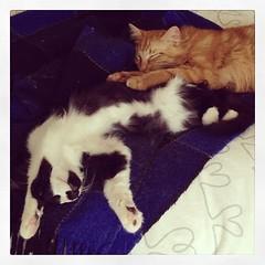 upload (merrickball) Tags: valencia cat square kitten squareformat finnegan stinks iphoneography instagramapp uploaded:by=instagram