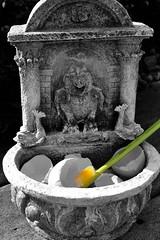 Brush (Lake Effect) Tags: gargoyle utata eggs toothbrush yolk ironphotographer utata:project=ip171 ip171