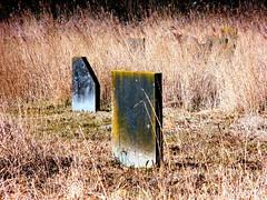Old Jewish Graveyard Zeeburg-02 (Quetzalcoatl002) Tags: grave graveyard amsterdam graves gravestone zeeburg gravesite jewishgraveyard