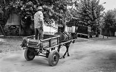 Al trote ~ Trot (Seryo) Tags: people bw horse blancoynegro argentina argentine animal fauna canon caballo persona blackwhite buenosaires gente carro sulky canona520 img2216 seryo sanclementedeltuyu sanclementedeltuy