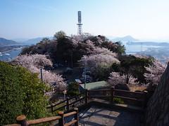 Ogonzan Cherry vol.2 (nineblue) Tags: japan cherry spring blossom hiroshima lookdown  cherryblossom sakura hanami