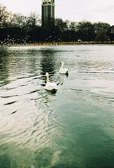 Roll 2 - Swans on the Lake (Cris Ward) Tags: park camera old city uk orange lake color colour slr bird london film water birds animal animals yellow rollei analog 35mm vintage landscape daylight swan lomo xpro lomography warm cross britain crossprocess grain feather slide retro hyde crossprocessing april hydepark analogue manual noise processed e6 yashica serpentine blown colorshift lsi c41 2013 yashicafxd colorreversal cr200 lomolab digibase rolleidigibasecr200