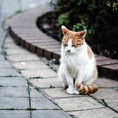 cat (Isc Fycn) Tags: park portrait cats film cat evening