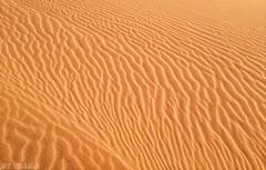 #صحراء #براري #رمال (Husam Alshetwi1) Tags: صحراء رمال براري uploaded:by=flickrmobile flickriosapp:filter=nofilter