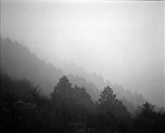 foggy (Osamu Sakaguchi) Tags: sky bw nature fuji rb67 acros100 sekorc50mm45