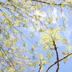 spring light_square 2 (RL Mulholland) Tags: blue light sunlight tree green primavera sol leaves composition square hojas spring focus dof bright lookingup lookup galicia 1855mm ferrol blueandgreen azulyverde fervenza canoneos600d rebelt3i