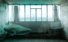 Shark Factory. (Olivier G35) Tags: photomontage urbex requintaureau
