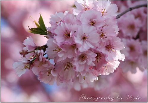 Wonderful Spring Time