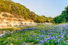 Bluebonnets and Rock Creek (Ronnie Wiggin) Tags: flowers trees sunset usa landscape spring nikon texas country wildflowers bluebonnets springtime blum rockcreek d300 bloomingflowers texasbluebonnets nikond300 rwigginphotos ronniewiggin