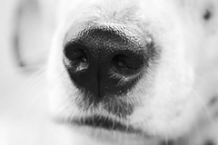 nosey  .... Thanks again Everyone :-)    (Explored) (Jak 45) Tags: