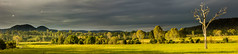 The Solitary Giant (Matthew Post) Tags: panorama storm tree rain squall rural cows post matthew glastonbury australia scene queensland darkclouds sunsetting sunet widgee matthewpost